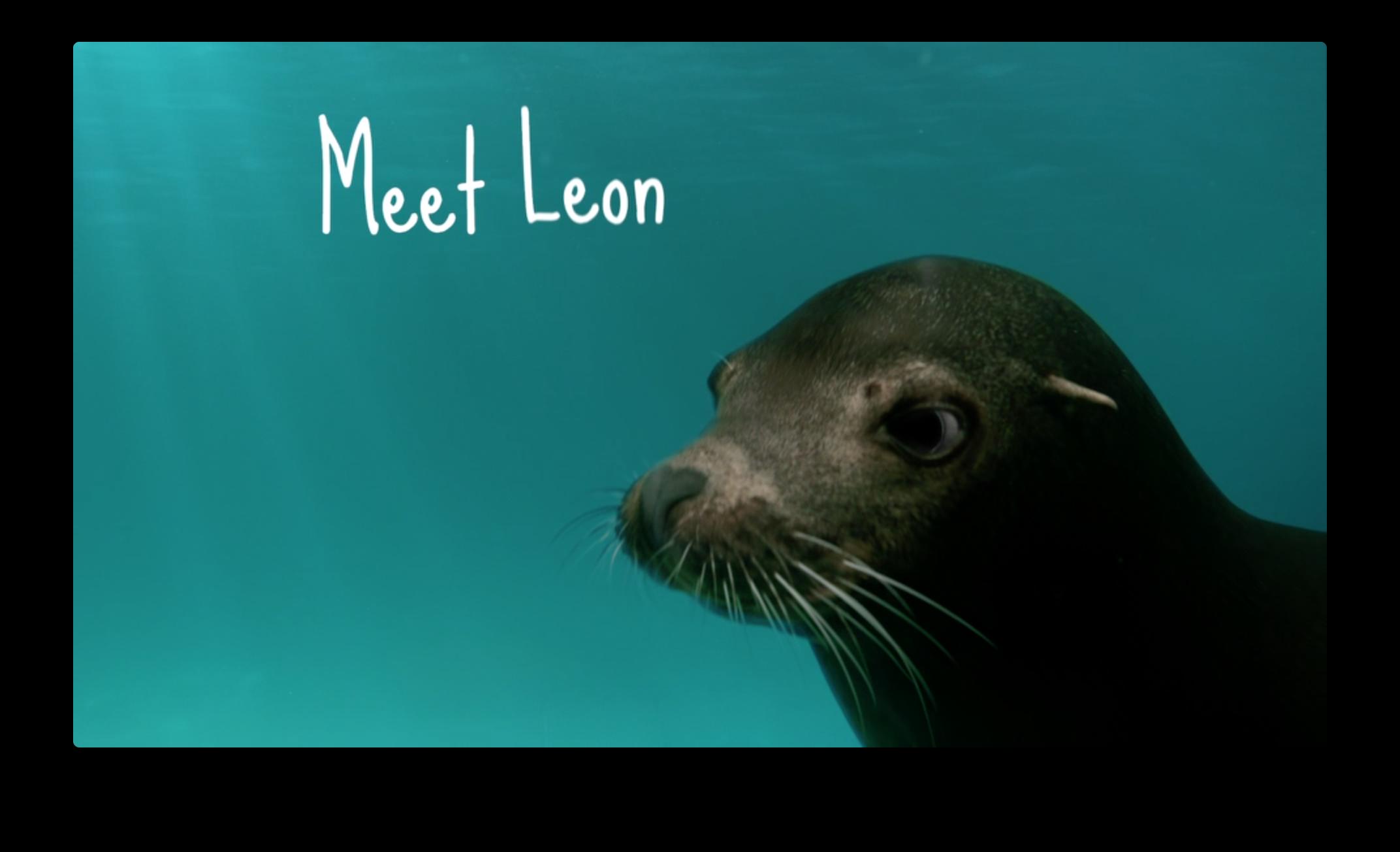 SeaWorld - Leon