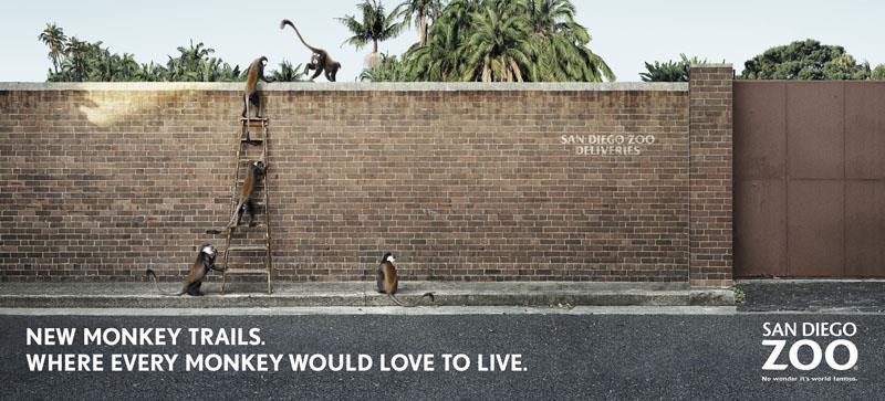 Monkey Trails Wall
